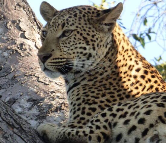 Botswana Holidays